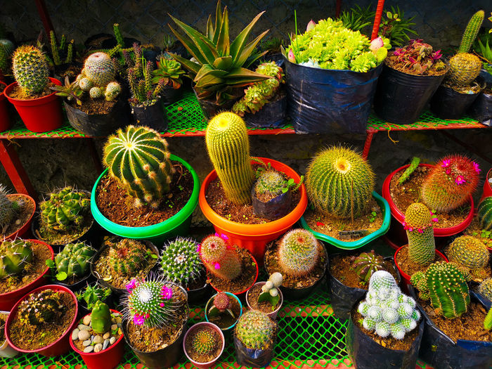 High angle view of succulent plants at market