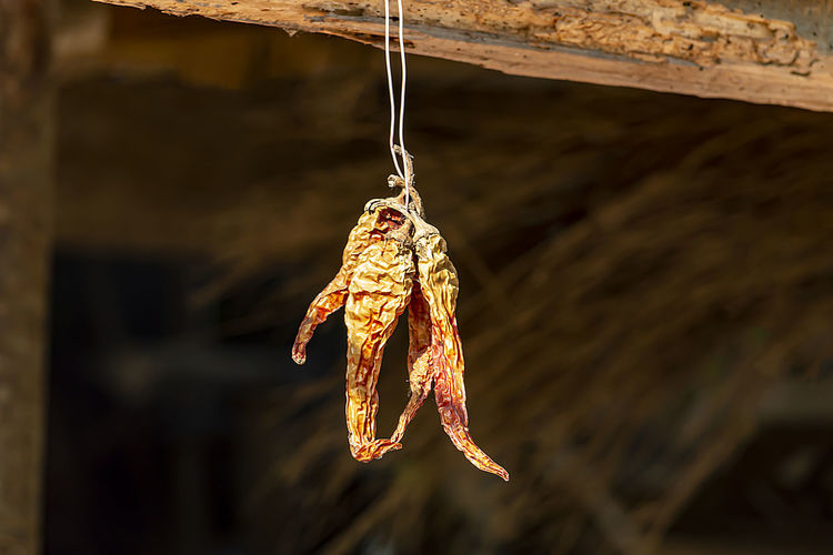 Close-up of dead fish hanging on rope