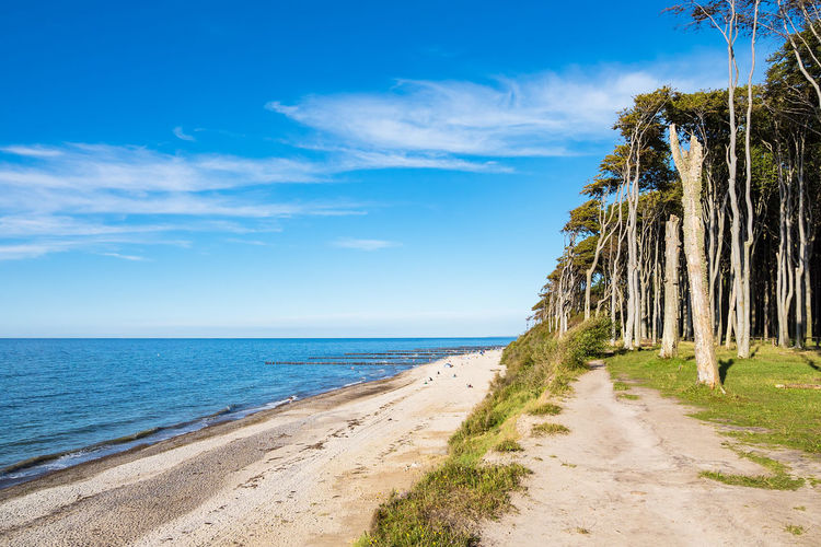 Coastal forest in Nienhagen, Germany. Baltic Sea Gespensterwald Nienhagen Germany Relaxing Sky And Clouds Beach Beauty In Nature Cloud - Sky Coast Coastal Forest Day Forest Journey Landscape Nature No People Outdoors Shore Tourism Travel Destinations Tree Vacation Water