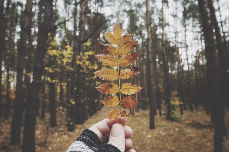 Person holding autumn leaf in forest
