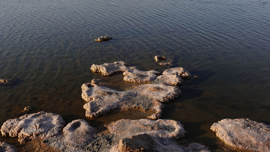 High angle view of crab on rock in lake