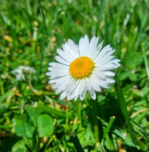 Flower Head Flower Petal Summer Leaf White Color Close-up Plant Green Color Blooming Wildflower In Bloom Plant Life Blossom Focus