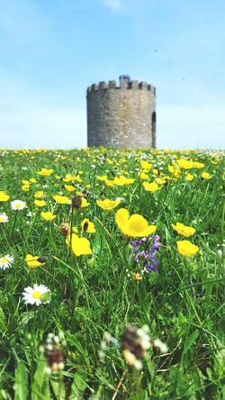 Grass Landscape Greenary Field Meadow Countryside Stone Buildings Tower Castle Hill Blue Sky Sky