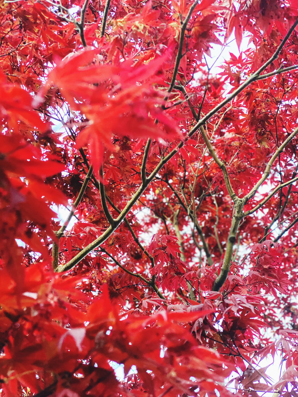 FULL FRAME SHOT OF RED FLOWERING TREE
