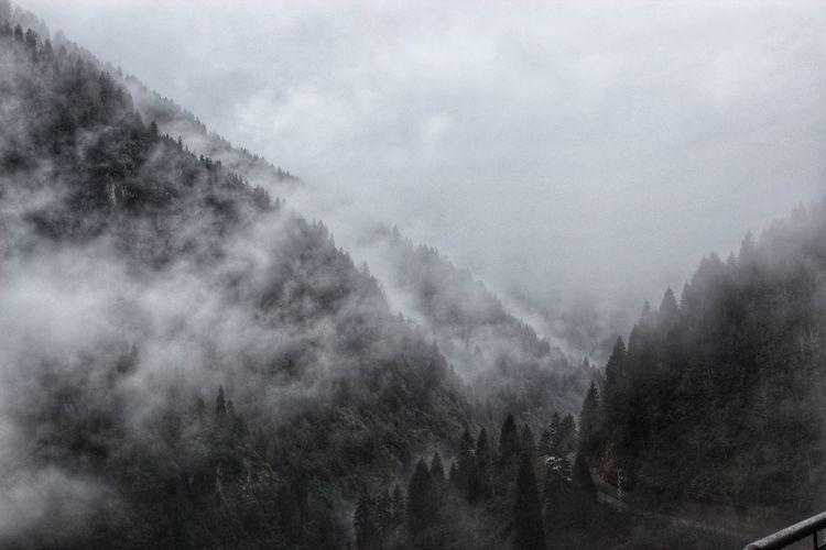 Cloud - Sky Sis Bulut Dağ Kaşkarlar Rize Turkey Agac Fog Forest Beauty In Nature Cloud - Sky Outdoors Landscape Sky Cold Temperature Day Rural Scene Scenics