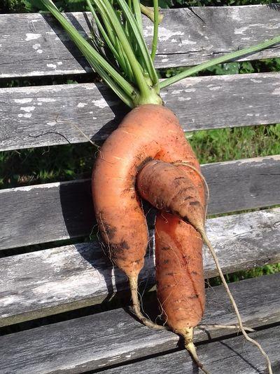 two sides of the same coin Möhre Möhren Carrot Carrots Male Likeness Male Carrot Karotte Karotten Männliche Karotte Tschernobyl Wurzelwerk Wurzelgemüse Wurzel Laune Der Natur Surprise Gift From The Earth Gartenüberraschung Gartenglück No People Garden Day Outdoors One Man Only Nature Only Men
