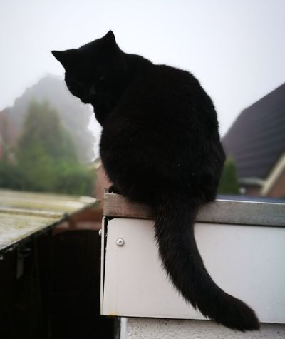 Cat Black Black Cat On Roof Outdoors Animal No People Day Fog