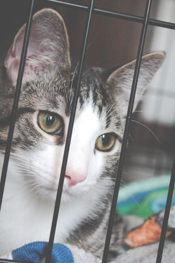 Animal Eye Animal Head  Animal Themes Bad Cat Cat Cat In A Cage Cat Portrait Close-up Domestic Animals Domestic Cat Feline In The Cage Mammal Mischief Mischievous Naughty Cat No People One Animal Pets Portrait Through Bars Whisker