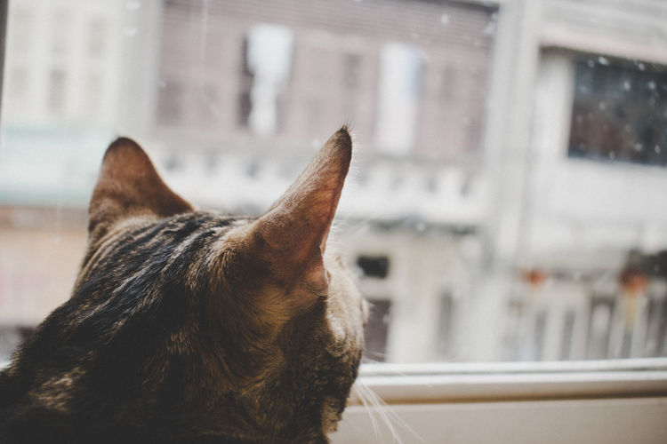Animal Head  Animal Themes Architecture Building Exterior Built Structure Cat City Close-up Cozy Day Domestic Animals Domestic Cat Focus On Foreground Looking Mammal Nature No People One Animal Outdoors Pets