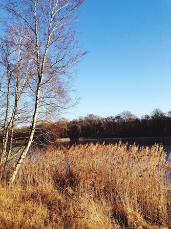 Sonne Oyter See Glücklich Natur Spaziergang Februar