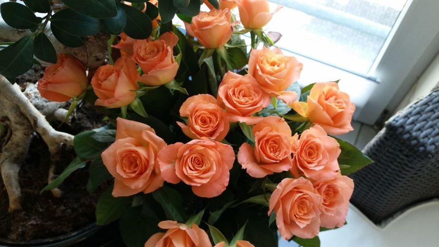 Kwiaty Rose🌹 Freshness Nature Rosé Flowers Rose - Flower Roza Flower Bouquet
