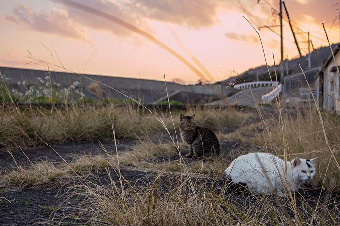 Cats Beauty In Nature Sunset Time Snap Nagasaki Nagasaki JAPAN