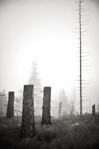Find the ladder Blackandwhite TreePorn Tree Silhouette Torso Trees