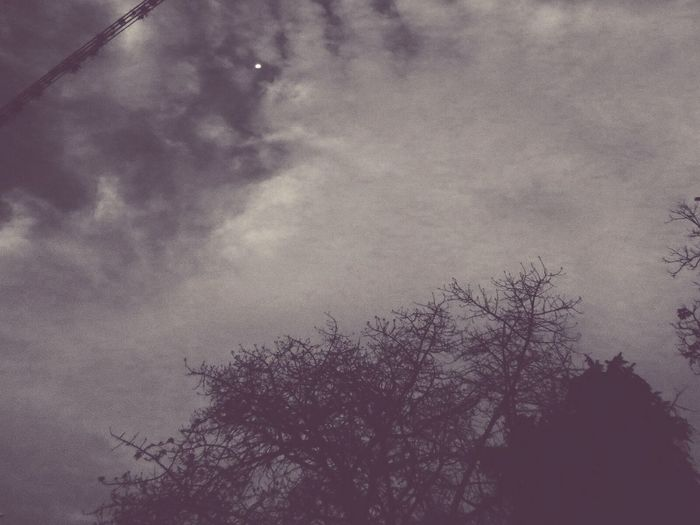 Noche. Picture