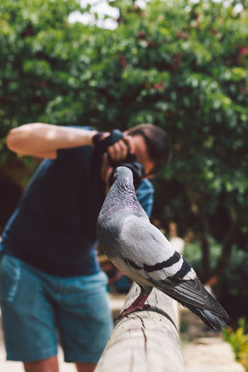 Man photographing pigeon perching on wood