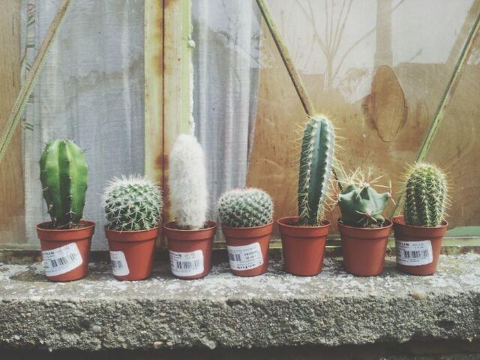 Cactus I Love Cactus Cactus Garden Favorite Flowers