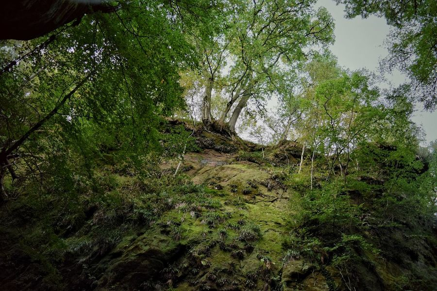 Green cliff Tree Growth Tranquility Forest Green Color Tranquil Scene Nature Scenics Beauty In Nature Branch Non-urban Scene Plant Tree Trunk Green Day Sky Outdoors Lush Foliage Greenery WoodLand Scotland Devil's Pulpit Solitude