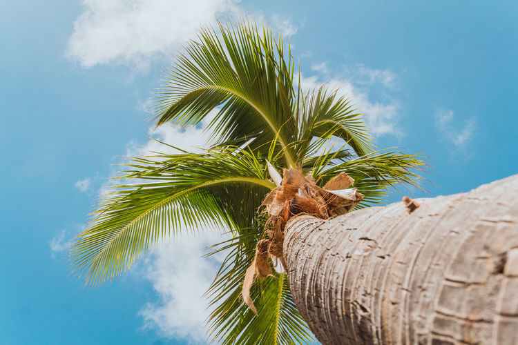 Life is always better beneath a palm tree | @LostBoyMemoirs SEE MORE: Instagram: @LostBoyMemoirs Lostboymemoirs.com 2018 In One Photograph Caribbean Sea Island Island Life Paradise Vacations Colorful Sailing Antigua Antigua And Barbuda Holiday Travel Travel Destinations Tourism Young Happiness Plant Part Coconut Palm Tree Tree Trunk Tropical Tree Tropical Climate Low Angle View Palm Tree Nature Beauty In Nature 17.62°