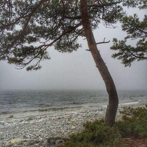 Amazing Nature IPhoneography Sea EyeEm Gallery