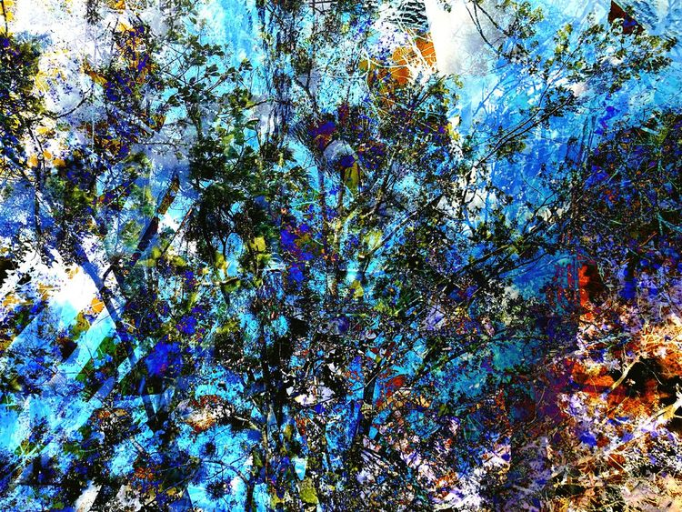 Backgrounds Multi Colored Day No People Outdoors Trees Trees And Sky EyeEmNewHere Close-up Combined Photos Combined Tree Reworked  Edit Edited Artistic Photo Few Eyeem Market