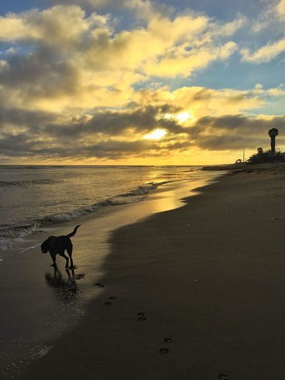 Dusk at San Onofre surf beach. Dog friendly beach DogLove Adventure Buddies