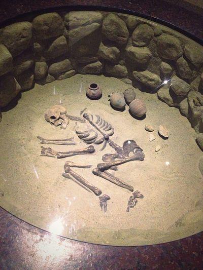 Noba Egyptian ancient skeleton Indoors  Close-up No People Butiful Skeleton Ancient Egyptian Egypt Aswan Noba Museum