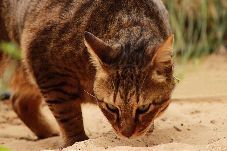 Photography Pets Cat Cutepredator