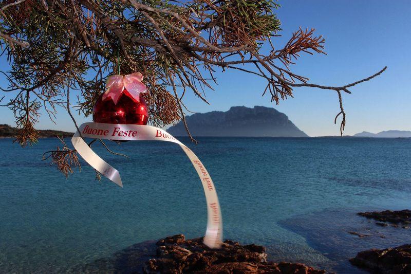 Sardegna Portoistana Christmas Natale 2017 Tree Water Sea Nature No People Nautical Vessel Beauty In Nature