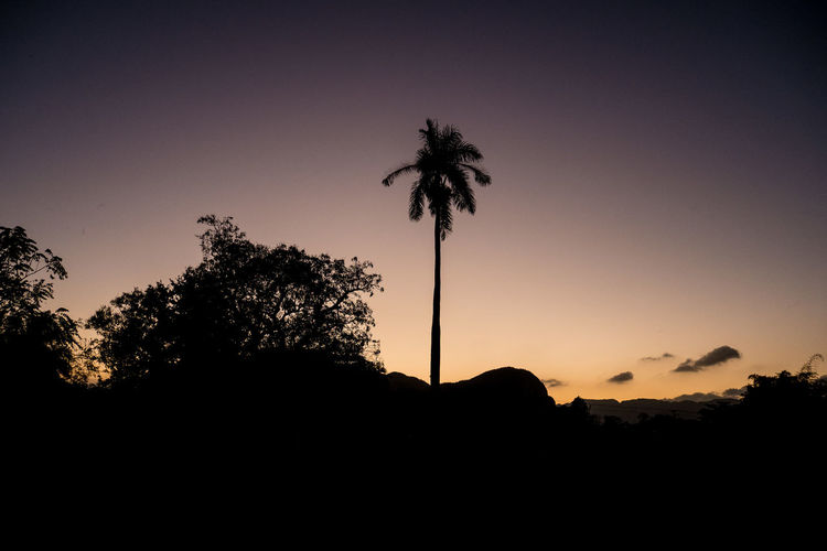 Cuba Viñales Beauty In Nature Carribean Clear Sky Day Growth Low Angle View Nature No People Outdoors Palm Tree Scenics Silhouette Sky Sunset Tranquil Scene Tranquility Tree Tree Trunk