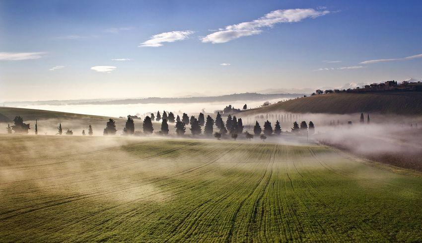 Nebbia mattutina Landscape