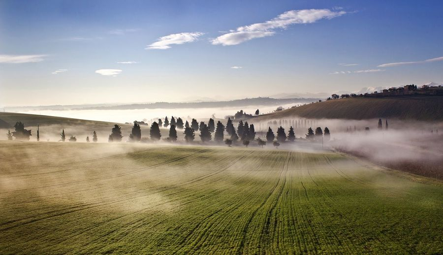 Fog over agricultural field