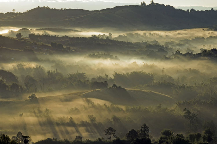 Sunshine and foggy mountain, Phetchabun province, Thailand. Sunshine And Shadows Beauty In Nature Environment Fog Landscape Mountain Nature Outdoors Plant Remote Scenics - Nature Sunshine Tranquil Scene Tranquility Tree