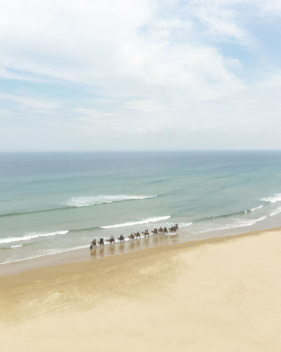 High angle view of camels at beach against sky