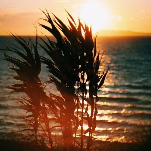 Sunset Beauty In Nature Nature Sky Majestic Sun Greece Corfu, Greece