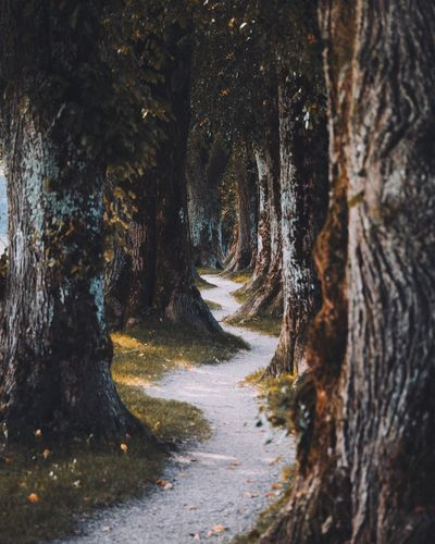 Walk between the giants. Germany Tree The Way Forward Direction No People Plant Nature Day Tree Trunk Road Trunk Tranquility Beauty In Nature Outdoors Transportation Tranquil Scene Growth Diminishing Perspective Land Forest Non-urban Scene