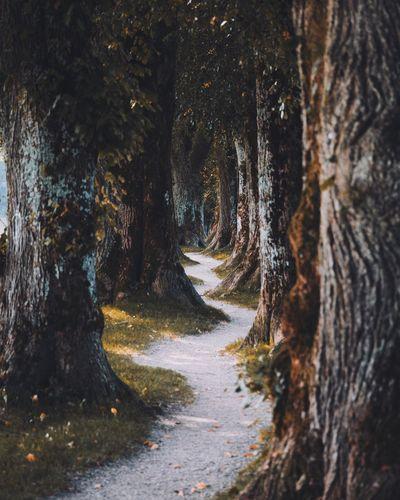 Footpath amidst trees on field
