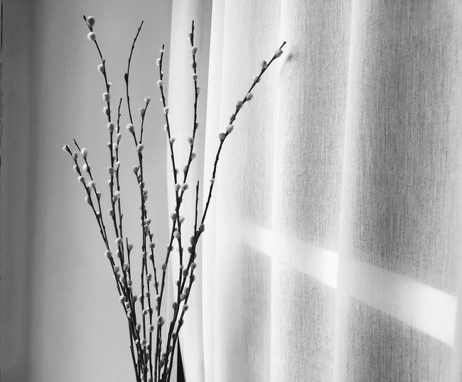 Spring finally Minimalism Wall - Building Feature Plant Stem Beauty In Nature Cold Temperature Selective Focus