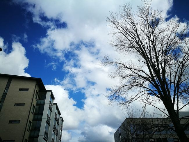 Low Angle View Cloud - Sky Sky Outdoors Day No People Building Exterior Architecture Tree