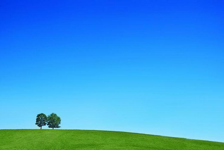 Scenic view of agricultural landscape against clear blue sky