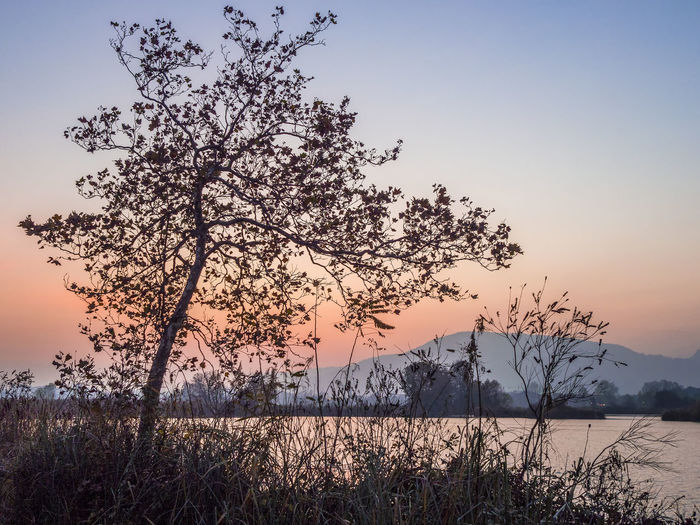 Bare Tree Beauty In Nature Grass Growth Idyllic Iseo Lake Lakeshore Landscape Lanscape Le Torbiere Nature Non-urban Scene Outdoors Plant Reserve Scenics Shadows Sky Stem Sunset Three Tranquil Scene Tranquility The Great Outdoors - 2016 EyeEm Awards