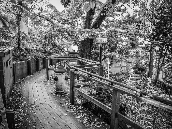 Day Empty Growth Nature No People Outdoors Plant Railing Sky The Way Forward Tranquility Tree Walkway