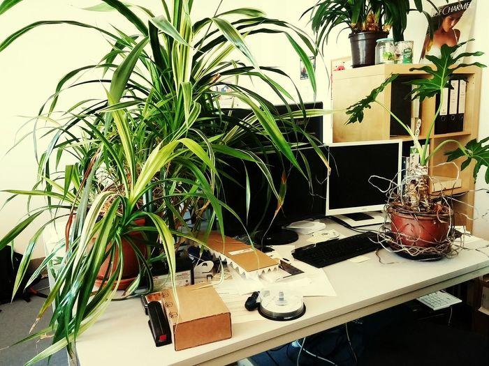 Kollegen! Man kann es auch übertreiben. Welcome to the jungle. GreenWorkstation