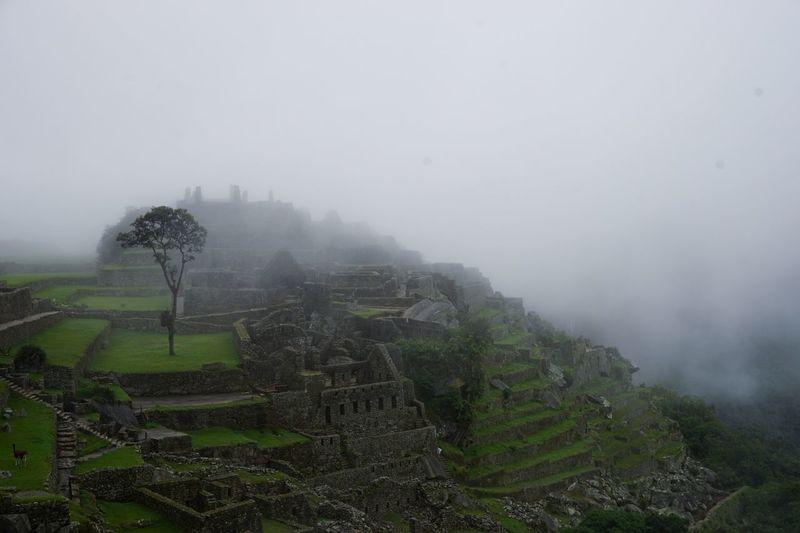 Traveling Peru Macchupicchu Macchu Picchu Tree Mysterious Foggy Inca