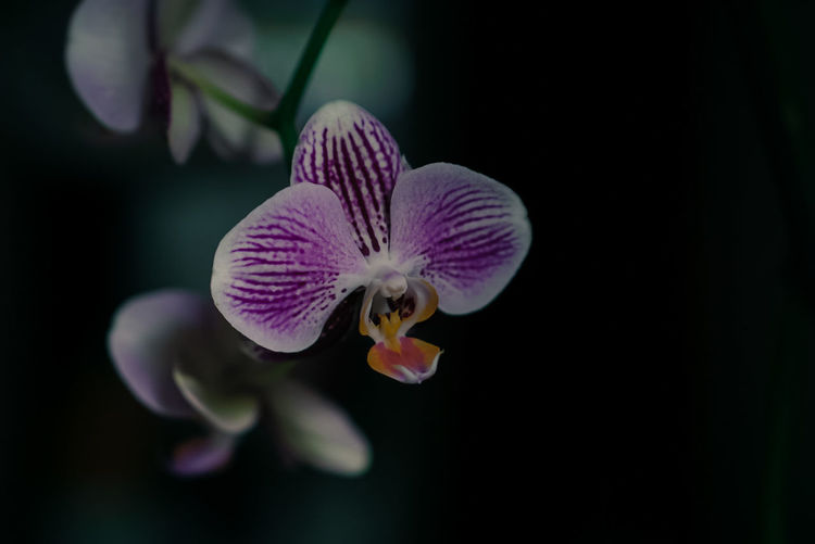 Orchids Orchidee Favouriteflower Beautifulflower  Beautifulnature Sony A6000 Sony Photography Photolovers