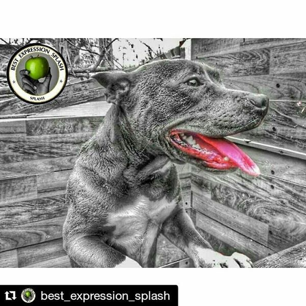 Repost @best_expression_splash with @repostapp ・・・ ... .✌complimenti✌congrats✌felicidades✌ 〰〰〰〰〰���〰〰〰〰〰〰〰〰〰 . .🎲〰THIS GREAT PHOTO BY:〰🎲 . .🏆 PHOTO:@jeanphillipbrulls 🏆 . 〰〰〰〰〰〰〰〰〰〰〰〰〰〰〰 . 😎 SELECTED BY: @vanecrofth ♥ @lughloco_78 . 〰〰〰〰〰〰〰〰〰〰〰〰〰〰〰 .Found: @vanecrofth @lughloco_78 . . ✔️ TAG : Best_expression_splash . ✔️ FOLLOW : @best_expression_splash . .〰〰〰〰〰〰〰〰〰〰〰〰〰〰〰〰〰 .⚠ prohibited pictures uploaded Internet .📷 originals pics .🌟Member ; @hubdirectory .〰〰〰〰〰〰〰〰〰〰〰〰���〰〰〰〰 . Sigue a nuestras páginas amig@s://Follow to our friends pages. @total_family @gallery_of_bnw @galkery_of_all @gallery_of_splash @best_expression_edit @best_expression_hdr @best_expression_bnw @best_expression_tatto @best_expression_sensual @editmoment_beache @editmoments_kids @editmoments_splash @editmoments_hdr @editmoments_bnw @Loves_colorsplash @love_splash @splash_greece @colorsplash_of_our_world . Tv_colorsplash Bns_colorsplash Love_splash Passion_for_splashing Splendid_colorsplash Total_splash Be_one_colisplash Colorsplash_of_our_world Splash_hdr_best Great_captures_splash Loves_colorsplash Splash_oftheworld Colorsplash_captures Tgif_colorsplash Splash_greece Splash_hdr_best Icu_coloursplash Editmoments_splash Estaes_splash Cool_splashes Igpowersplash Ig_splash Catalunya_splash . ✌🎨🌟🎨🌟🎨🌟🎨🌟🎨🌟🎨✌.️ .Found : @lughloco_78 @vanecrofth . ✌🎨🌟🎨🌟🎨🌟🎨🌟🎨🌟🎨✌. ➖➖➖➖➖➖➖➖➖➖➖➖➖➖