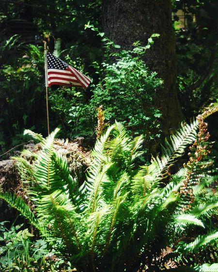 campsite in Cougar Wa Washington State NatureCougarWa Camping Independence Day