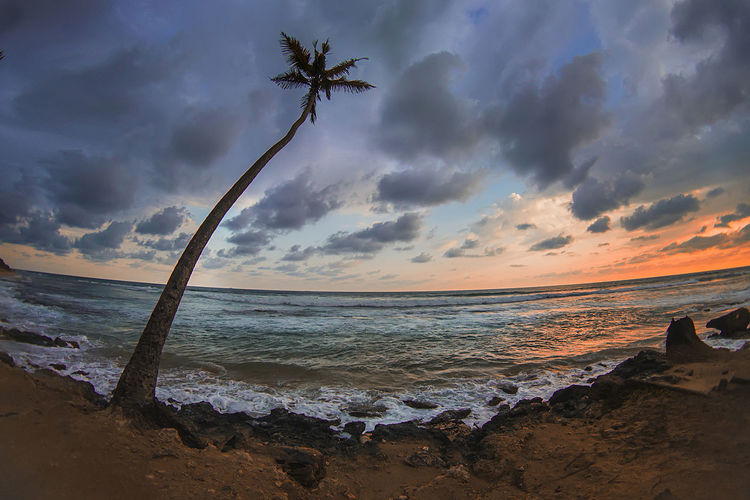Scenic view of palm tree by ocean against cloudy sky