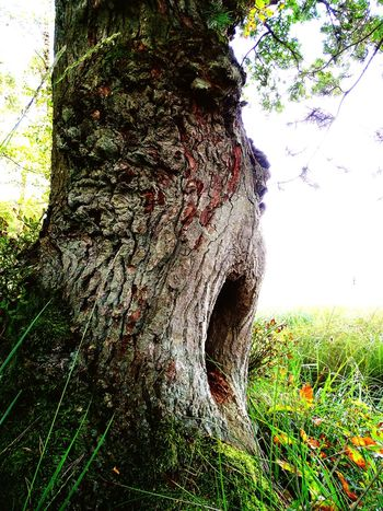 Tree trunk Tree Growth Close-up Clear Sky Nature Green Color Beauty In Nature Outdoors Focus On Foreground Day Tranquility Tranquil Scene No People Scenics Whole In Tree Growing Duvenstedt Germany
