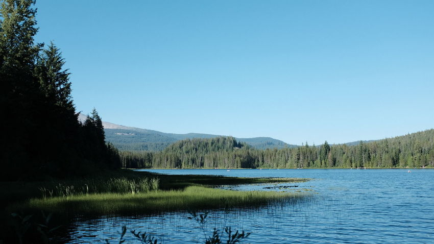 Mount Hood Beauty In Nature Blue Clear Sky Copy Space Day Idyllic Lake Landscape Mount Hood National Forest Mountain Nature No People Non-urban Scene Outdoors Plant Purity Scenics - Nature Sky Tranquil Scene Tranquility Tree Trillium Lake Water