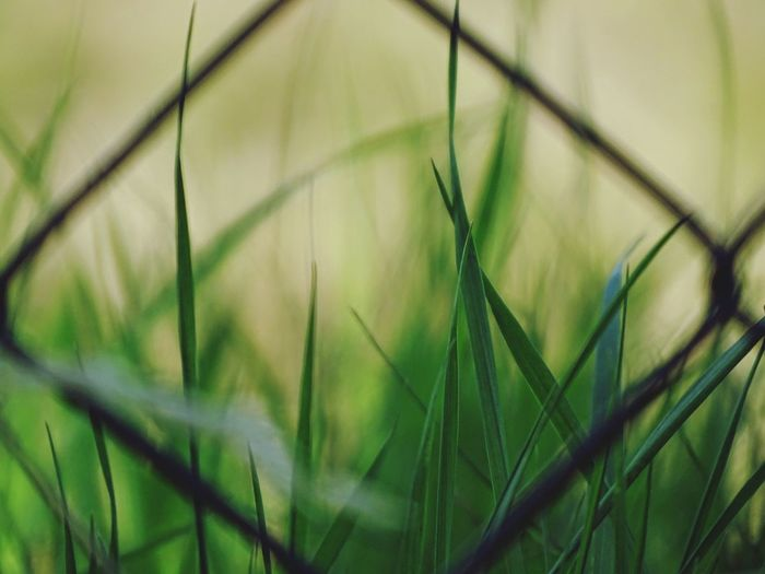 Close-up Nature Growth Green Color Plant Grass Day Selective Focus Protection Outdoors No People Backgrounds Full Frame Beauty In Nature Rural Scene Fragility Freshness